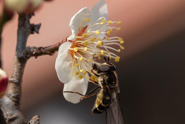 La fourmi et l'abeille